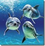 3dolphins
